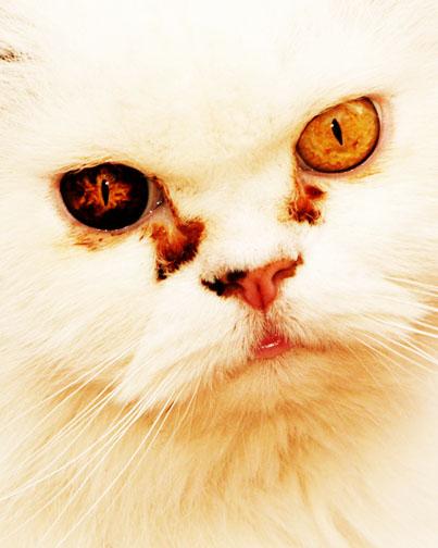 catlikepredator Avatar
